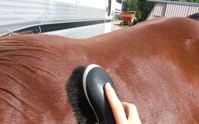 Part 1: How To Groom A Horse (with Video)