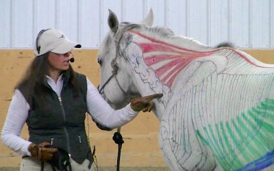 Equine Biomechanics